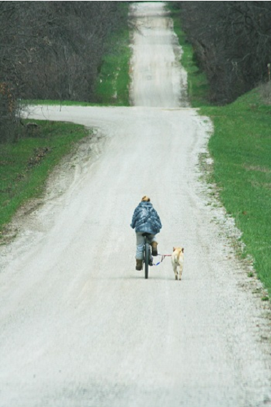 DoggerJogger Works For All Dogs, All Bikes