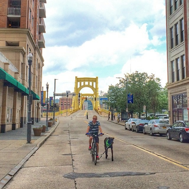 Angus the Great - DoggerJogger - Pittsburgh Bridges